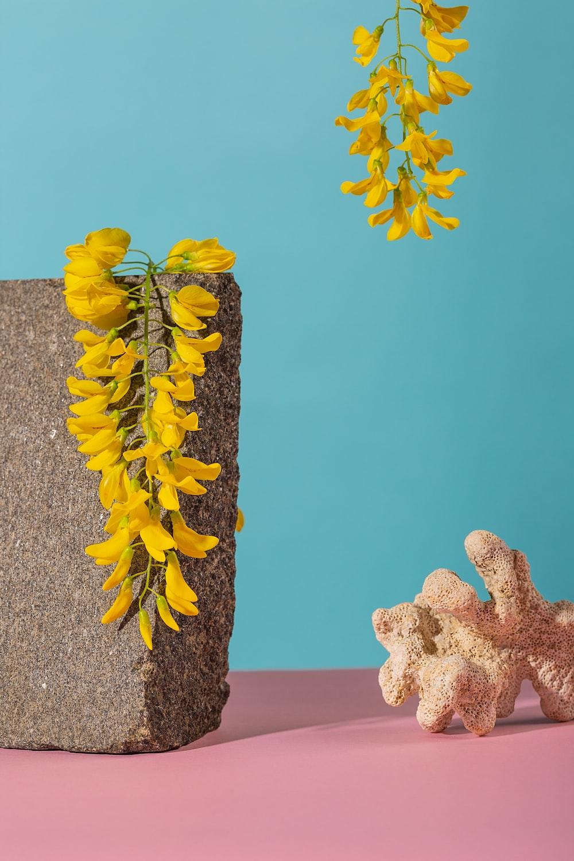 yellow flowers on gray rock