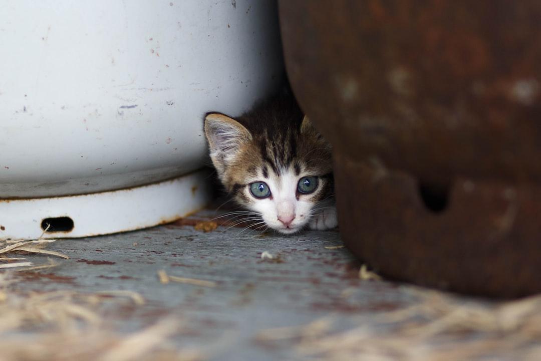 Country Kitten