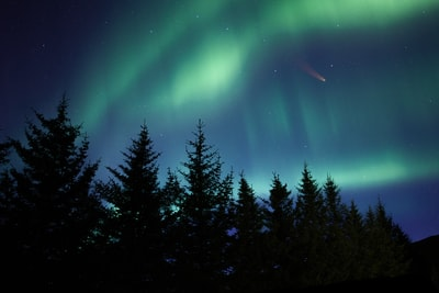 green pine trees under blue sky asteroid teams background