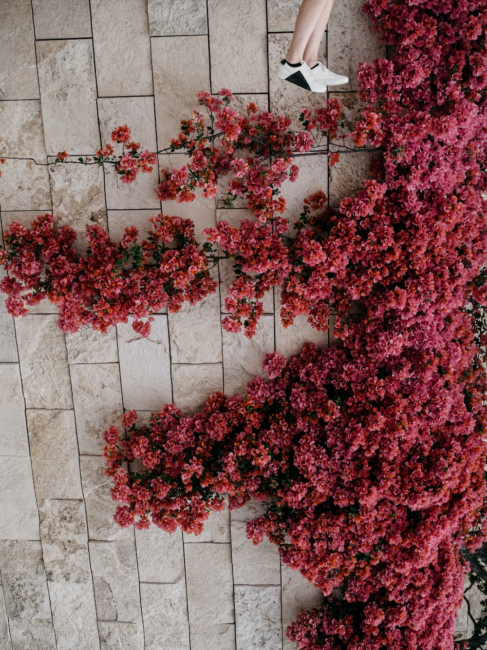 red flowers on white concrete wall
