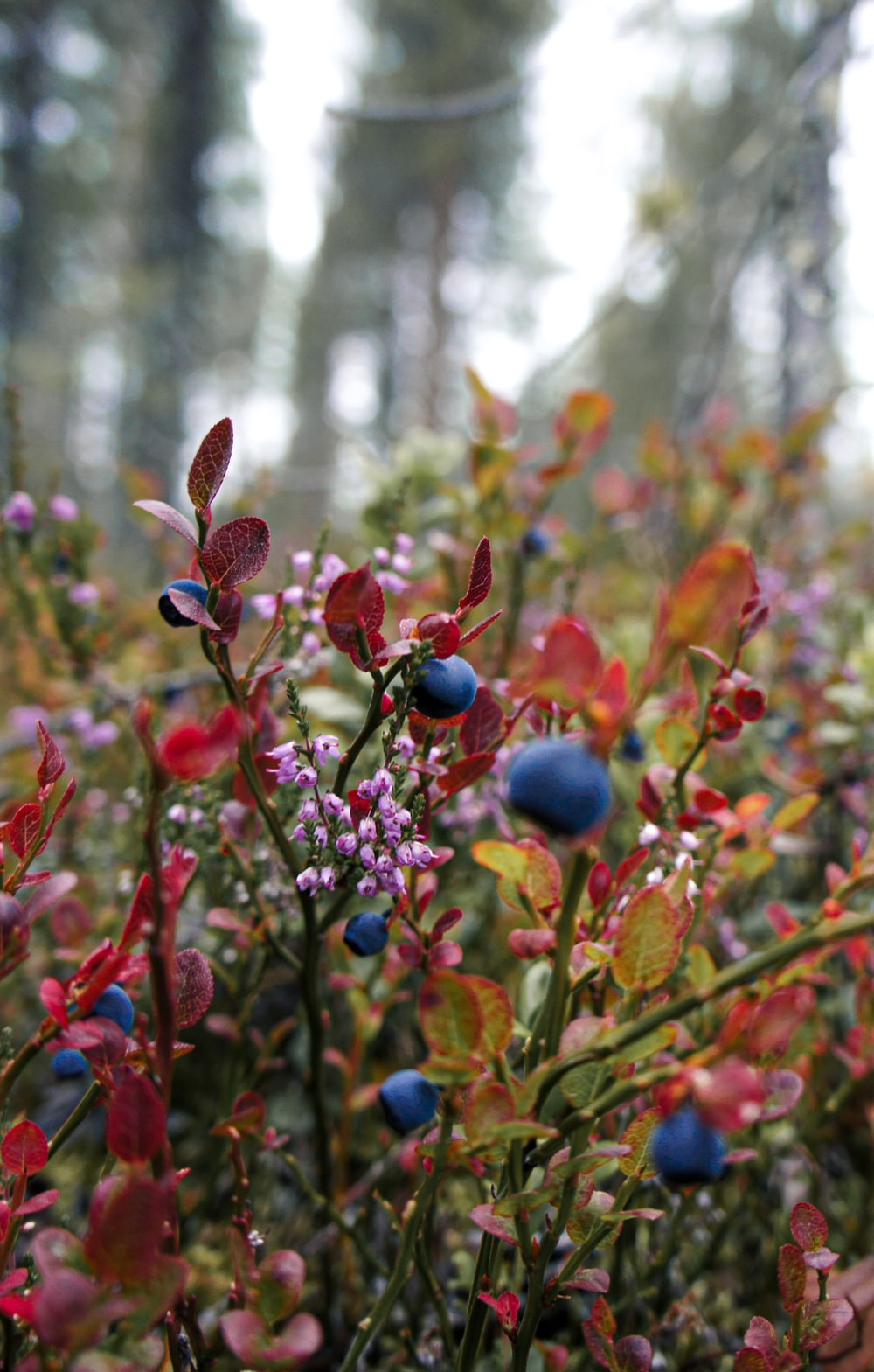 blue and red flower buds in tilt shift lens