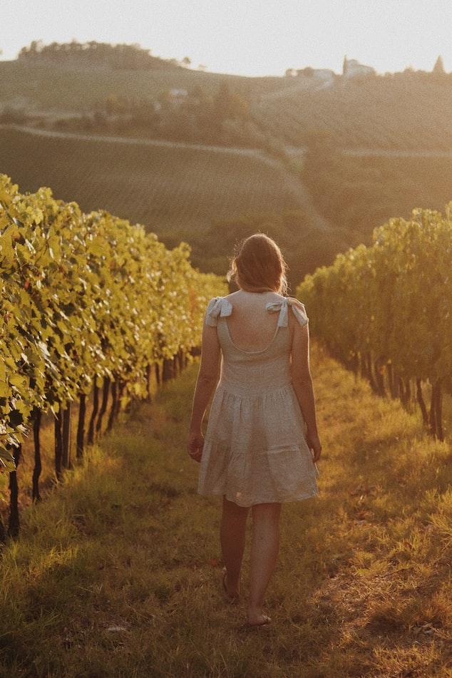 Silos Estate Vineyard