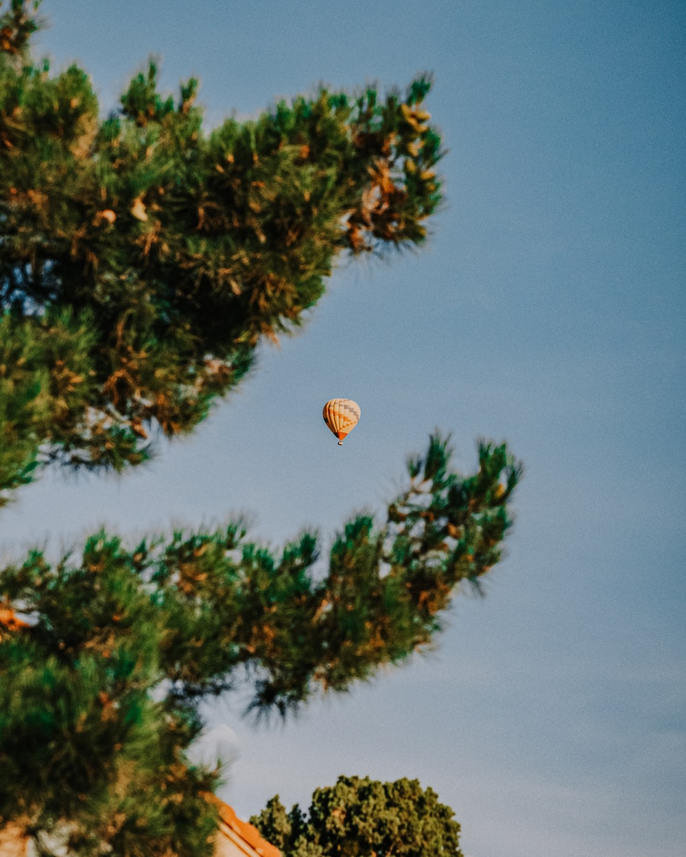 hot air balloon flying over green pine tree during daytime