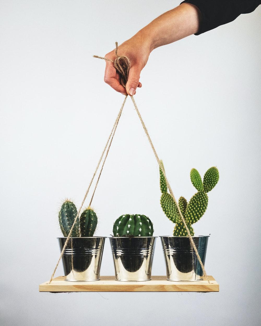 green cactus plant on white pot