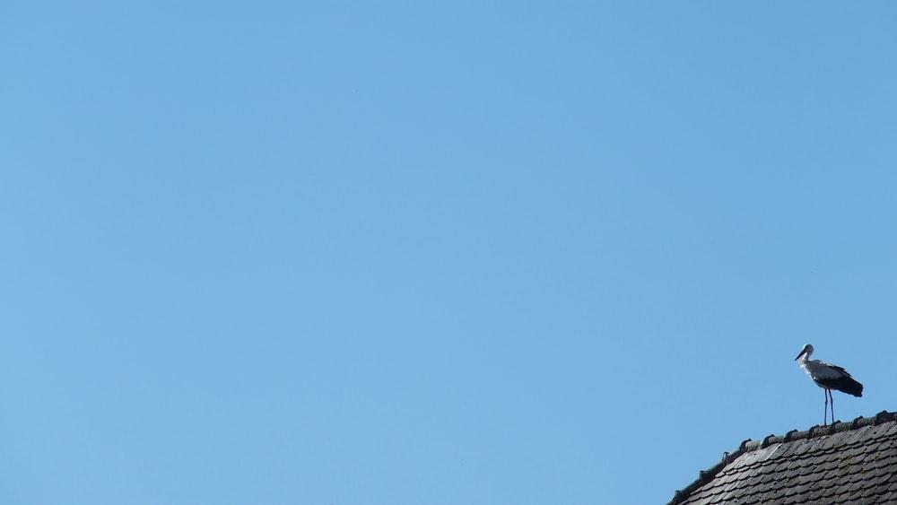 blue sky over black bird on black wire