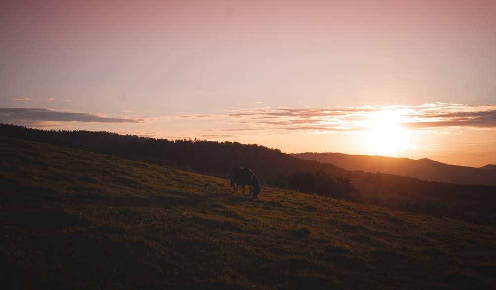 silhouette of horse on grass field during sunset