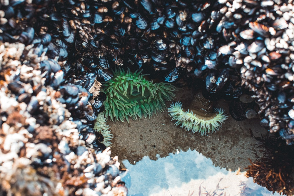 green and white coral reef