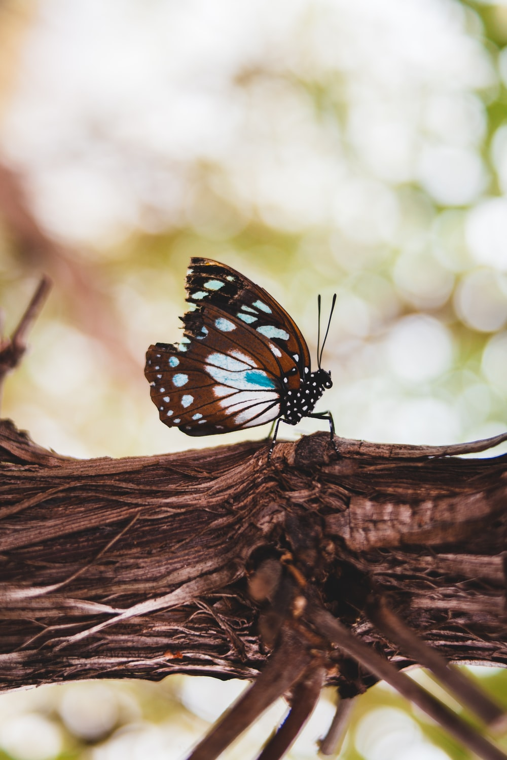 black white and blue butterfly perched on brown tree branch in close up photography during daytime