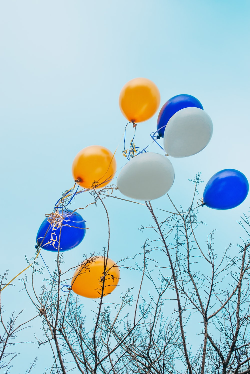 blue yellow and white balloons on bare tree during daytime
