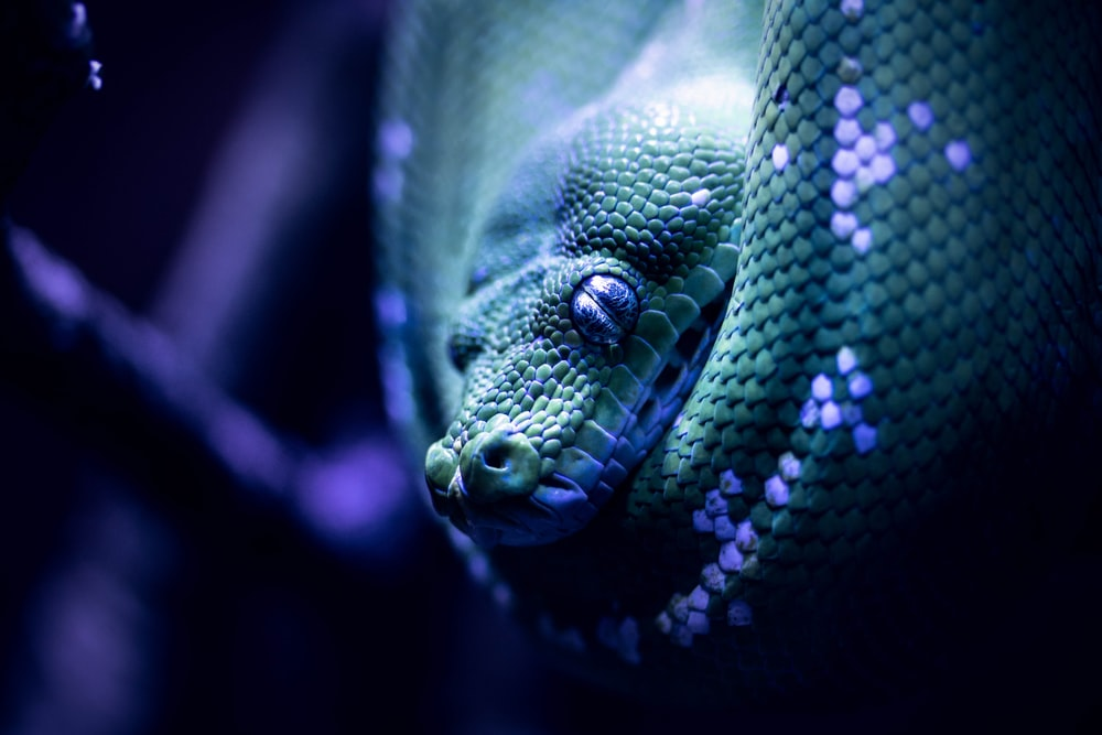green snake in close up photography