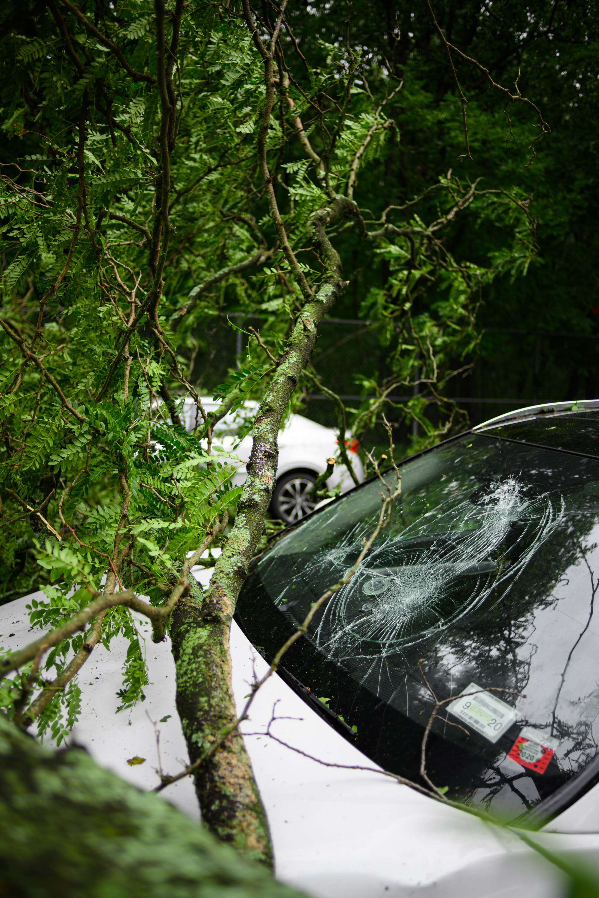 The windshield of a white car broken from a falling tree due to a storm.
