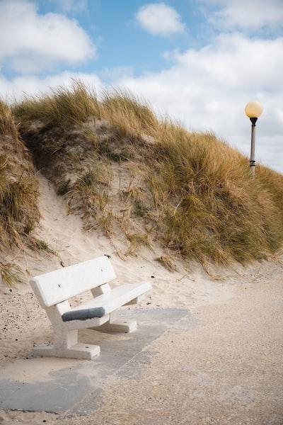 white wooden bench near green grass during daytime