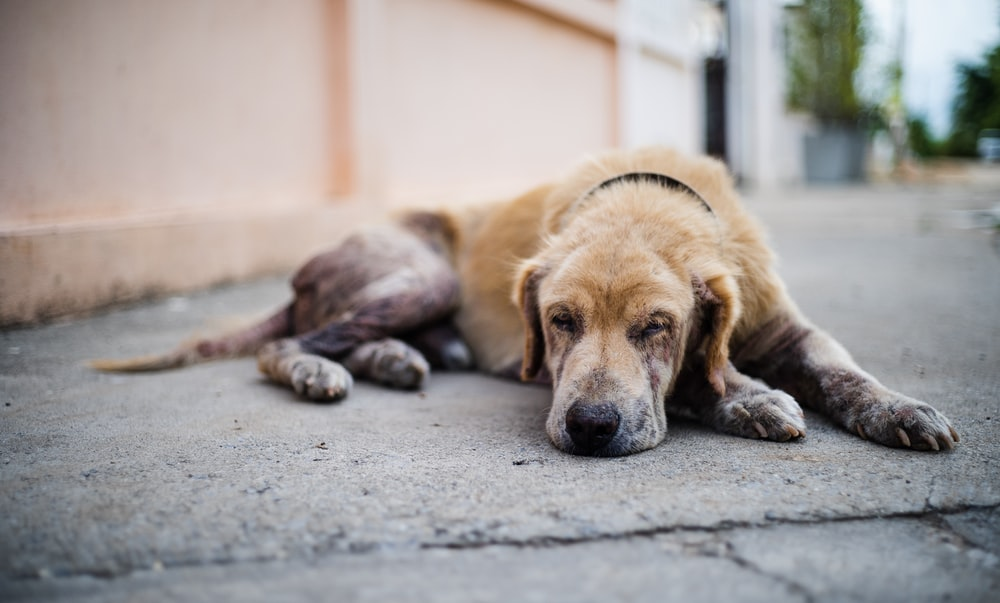 brown and white short coated dog lying on gray concrete floor during daytime