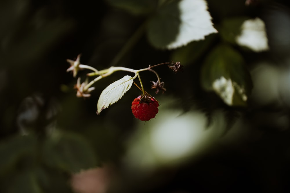 red round fruit with white leaves