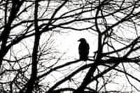 Momentum raven stories
