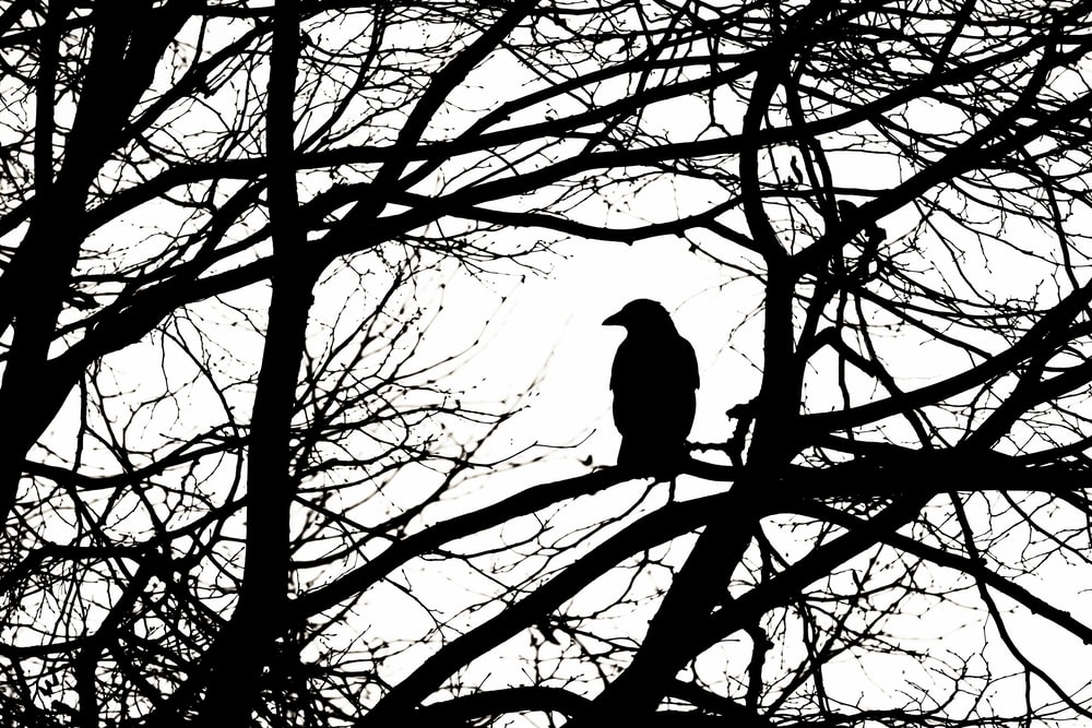 black bird on bare tree