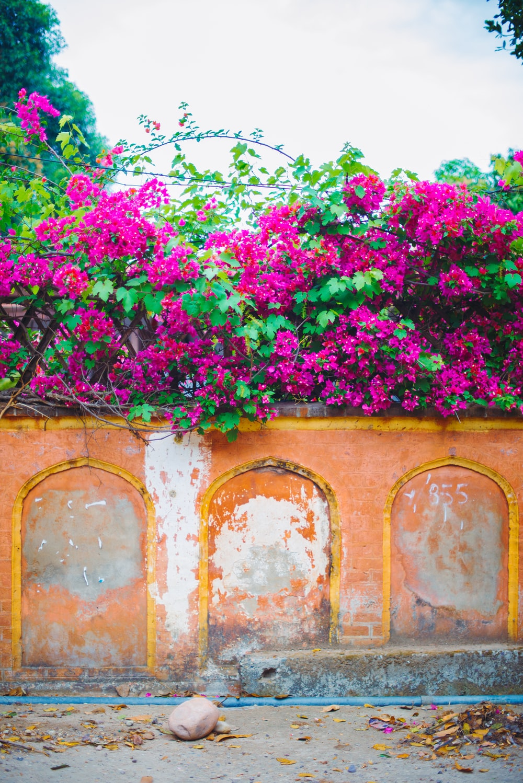 pink flowers on brown brick wall