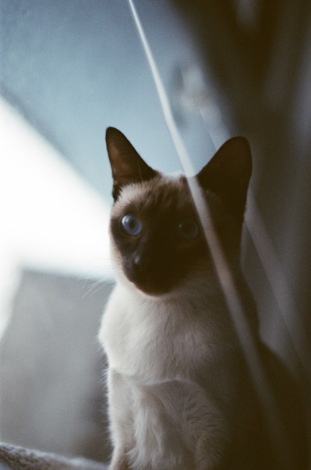 Salomé the cat