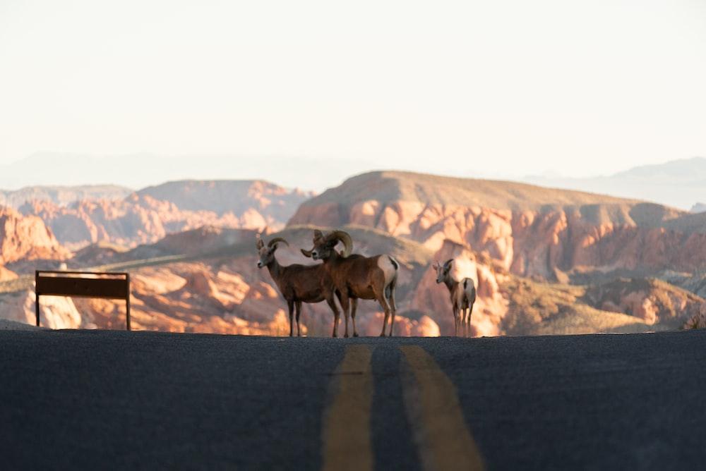 group of horses on gray asphalt road during daytime
