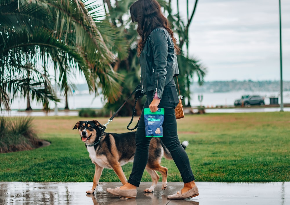 woman in black leather jacket and blue denim jeans holding black and brown short coated dog