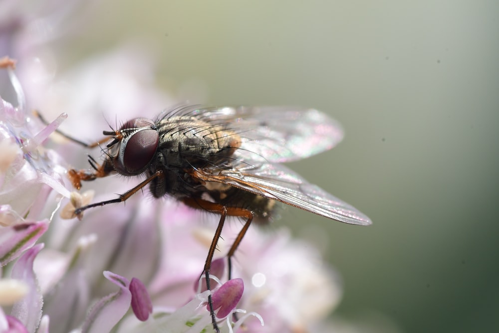 black fly perched on white flower in close up photography during daytime