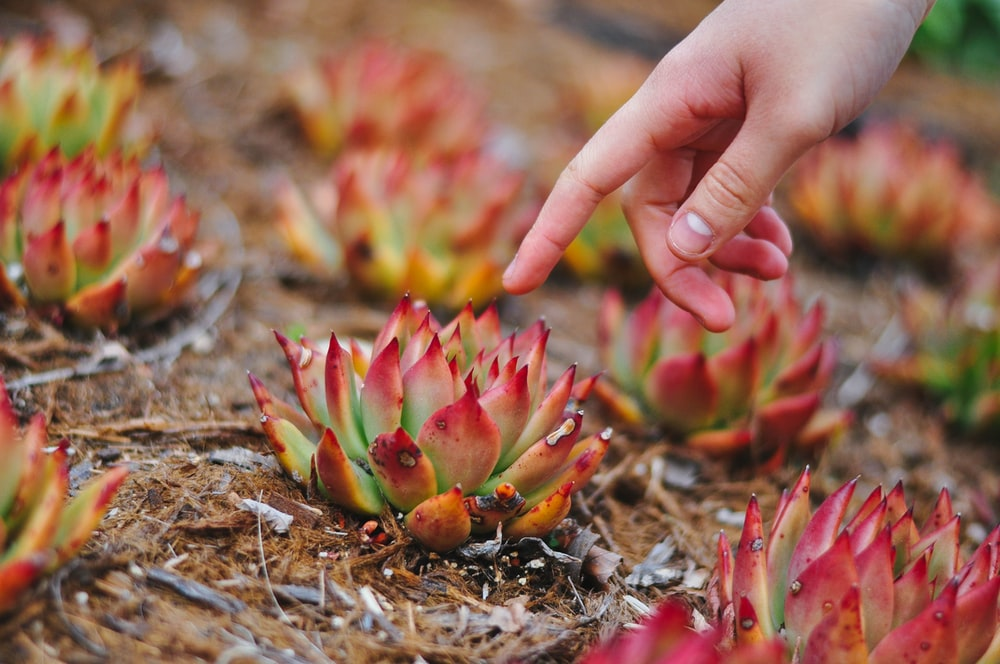 pink and green flower on brown soil