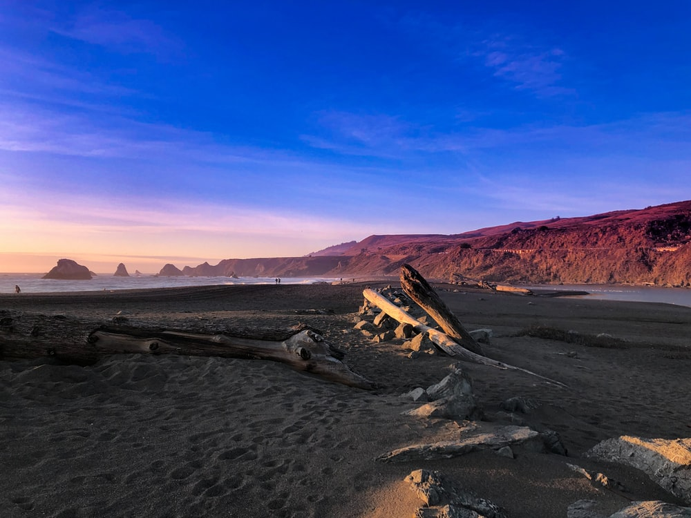 brown wooden log on brown sand during daytime