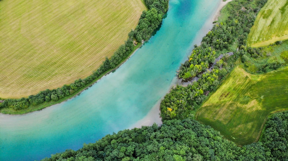 aerial view of green trees and body of water
