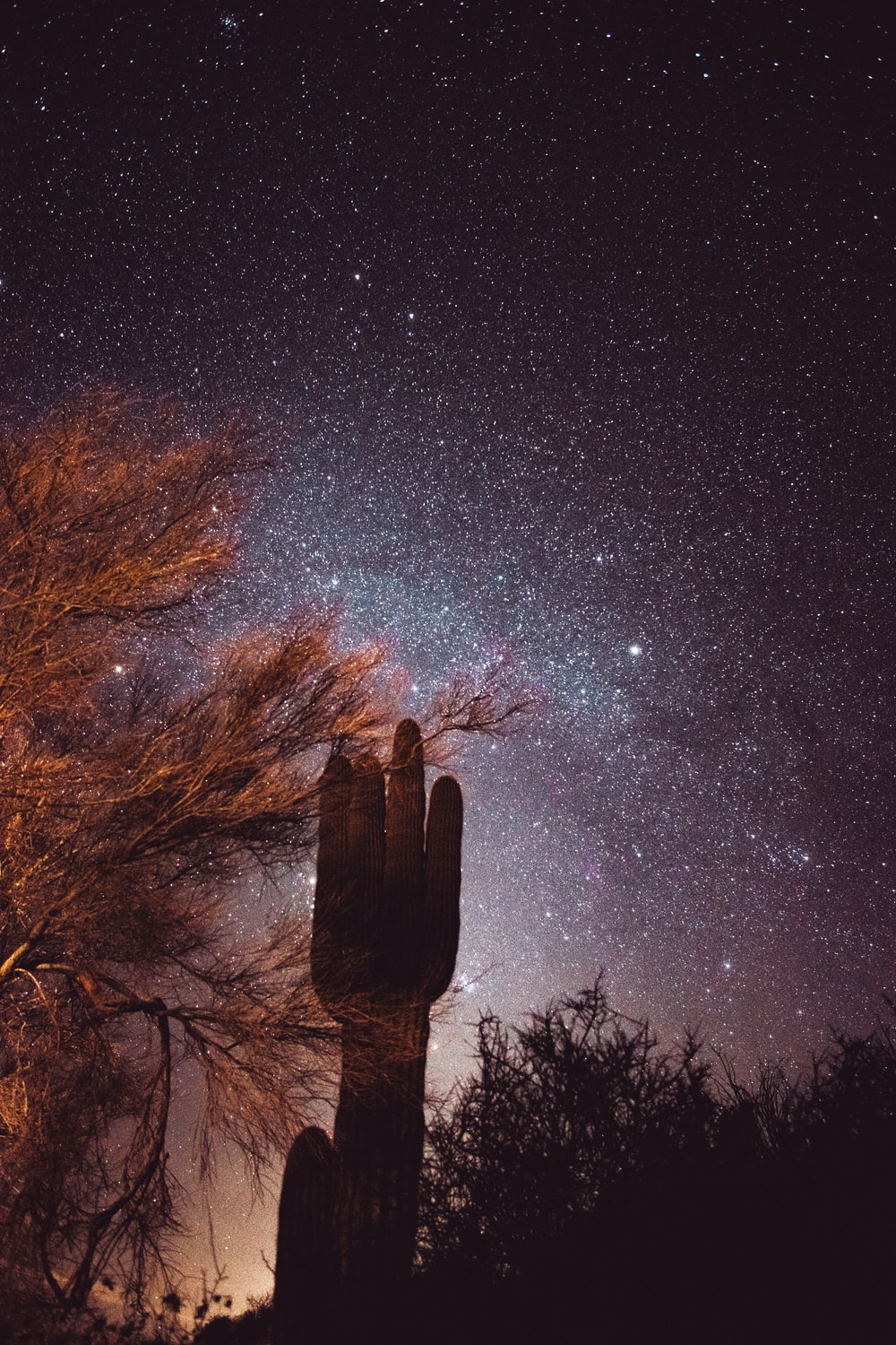 brown bare trees under starry night