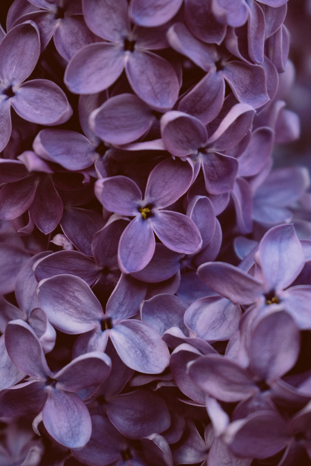 purple flowers in tilt shift lens
