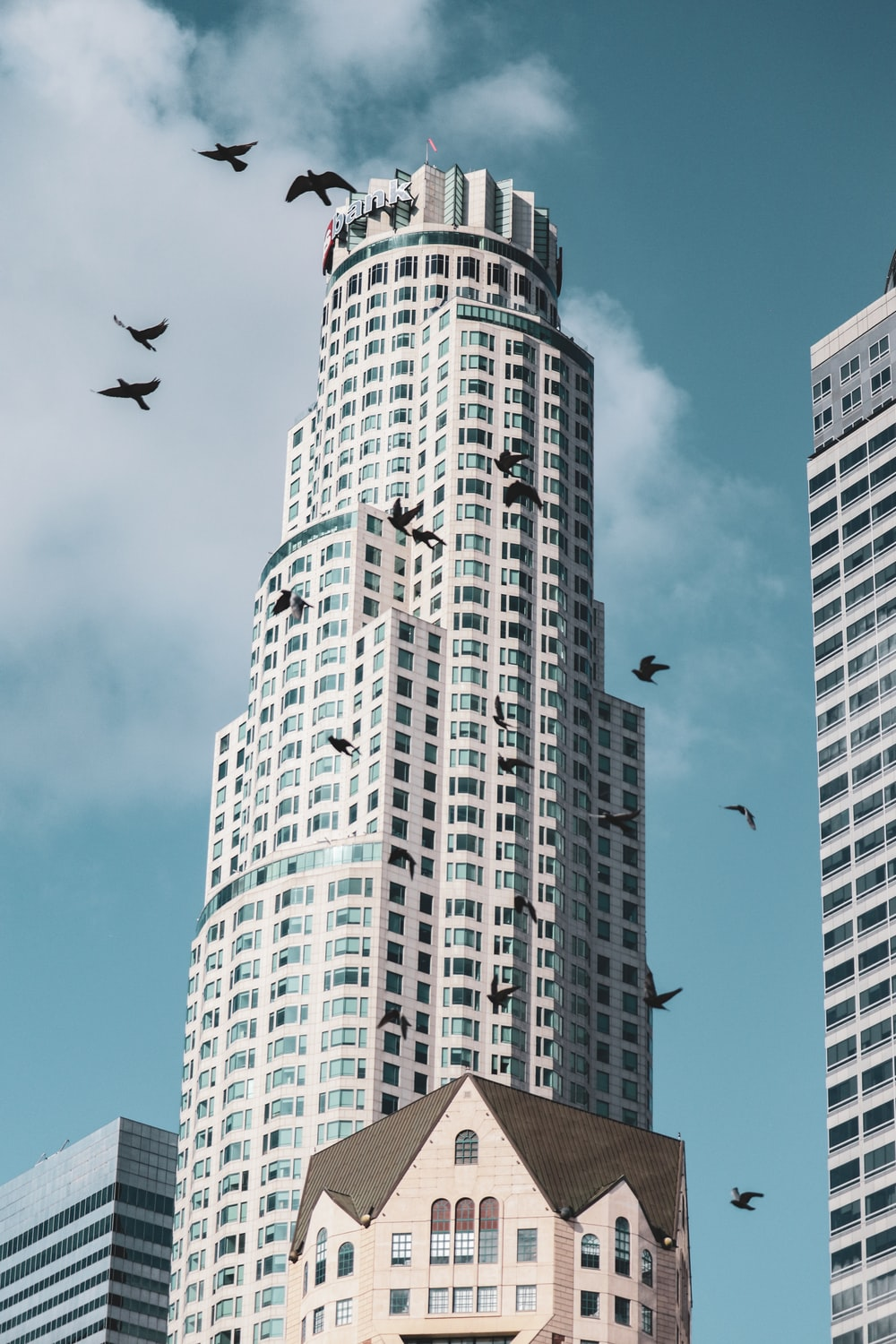 low angle photography of three birds flying over high rise building during daytime