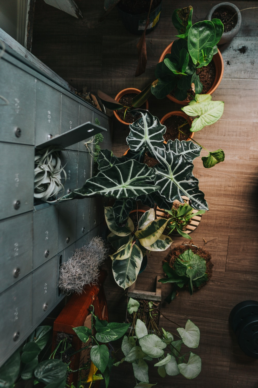 green plant on black wooden table