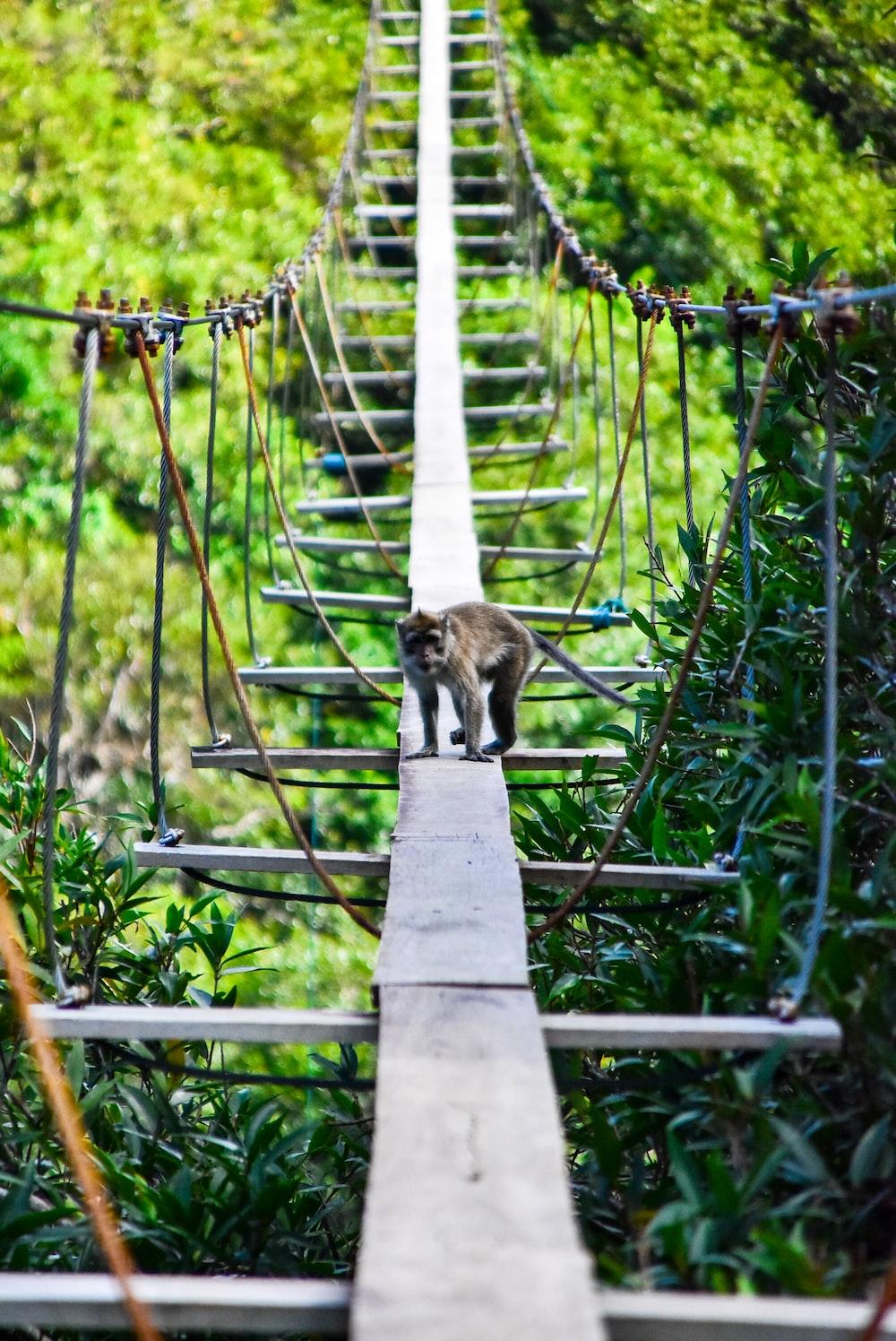 brown tabby cat on brown wooden bridge during daytime