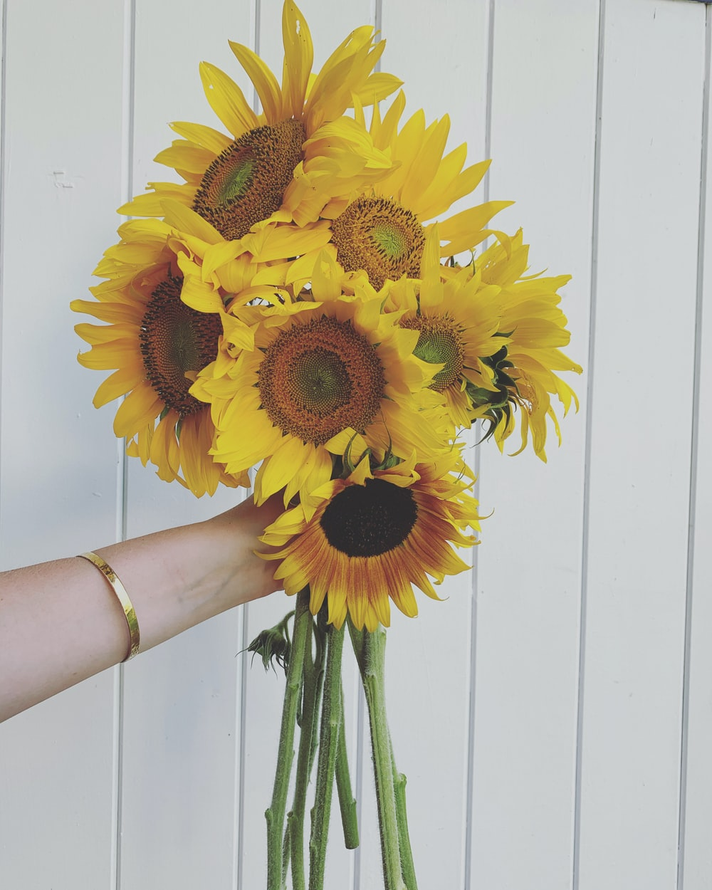 person holding sunflower bouquet in front of white wall