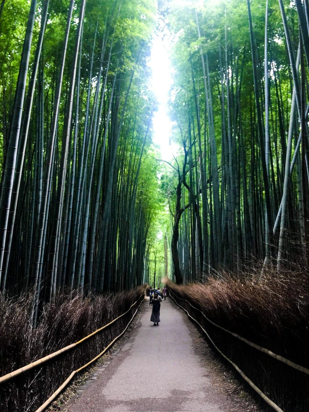 man in black jacket and black pants walking on pathway between bamboo trees during daytime