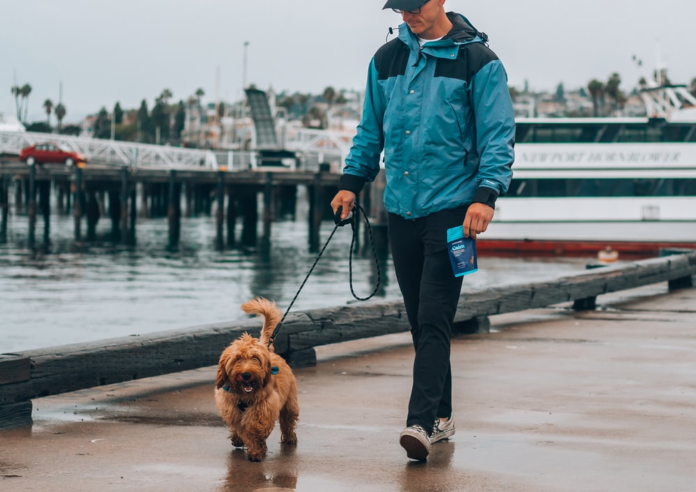 man in blue jacket and black pants standing beside brown long coated dog on dock during