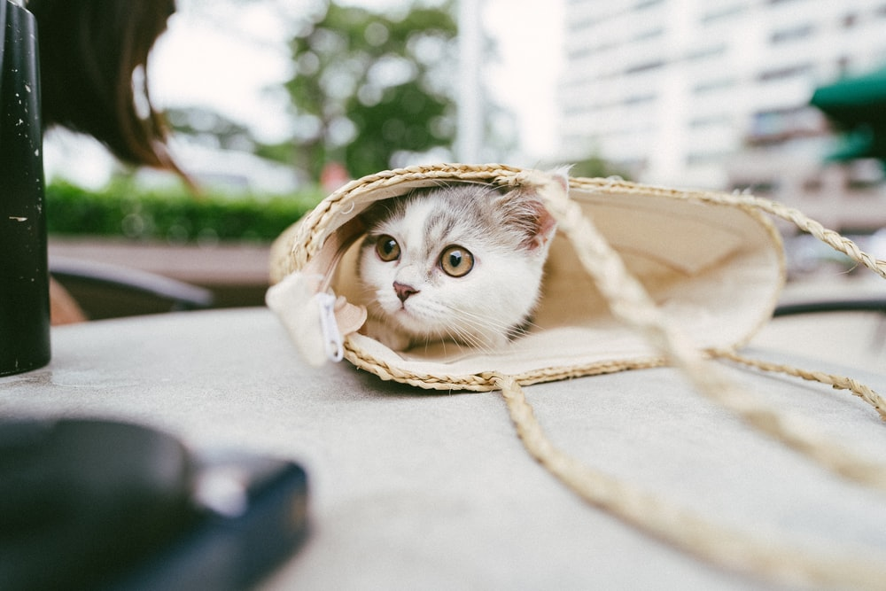 white and brown cat in brown wicker basket