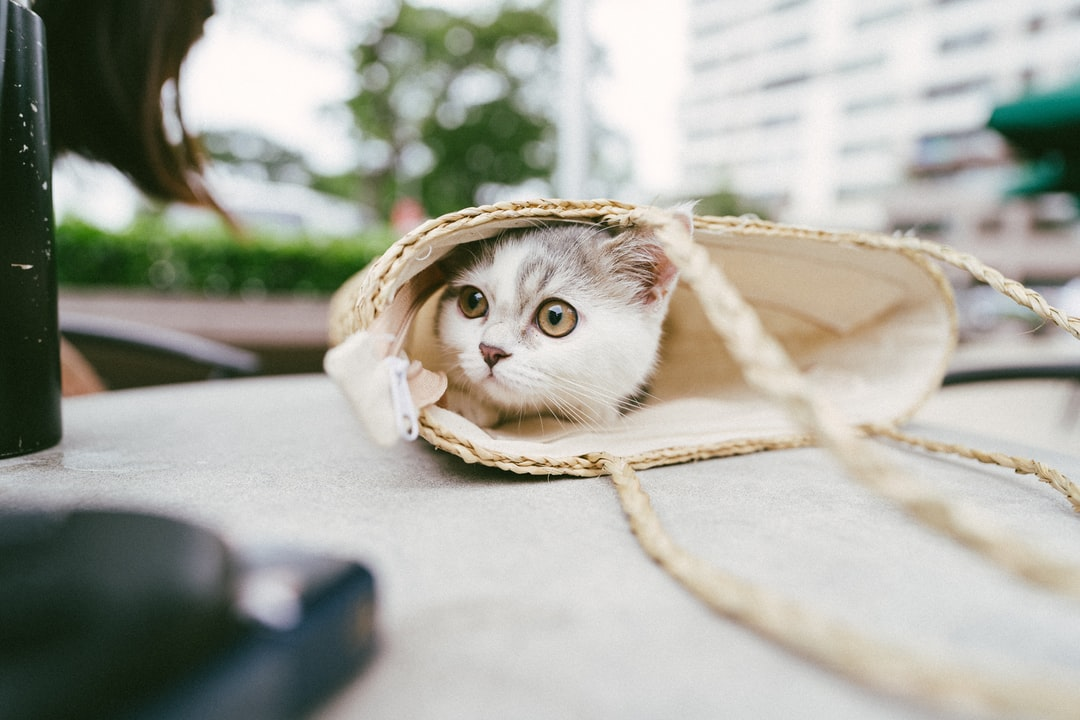White and Brown Cat In Brown Wicker Basket - unsplash