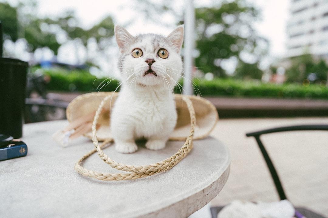 White Cat On Brown Round Table During Daytime - unsplash