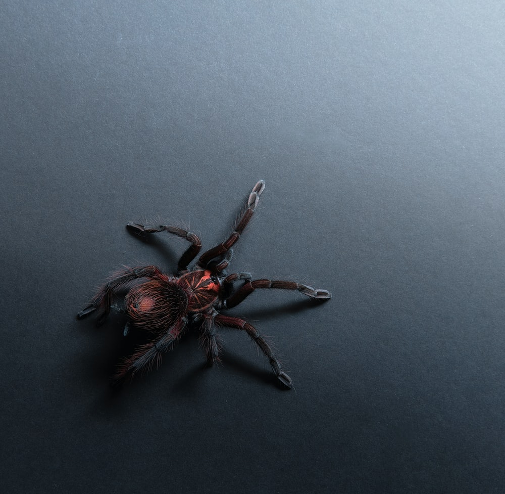 black spider on gray surface