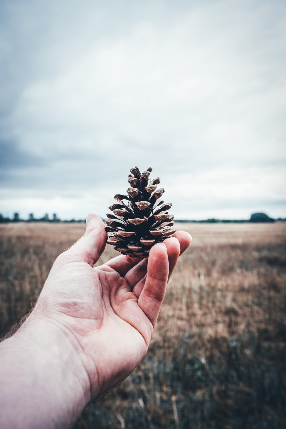 person holding pine cone during daytime