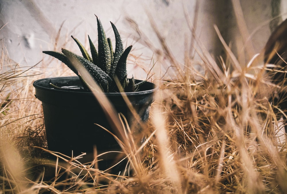 black and white bird nest on brown grass
