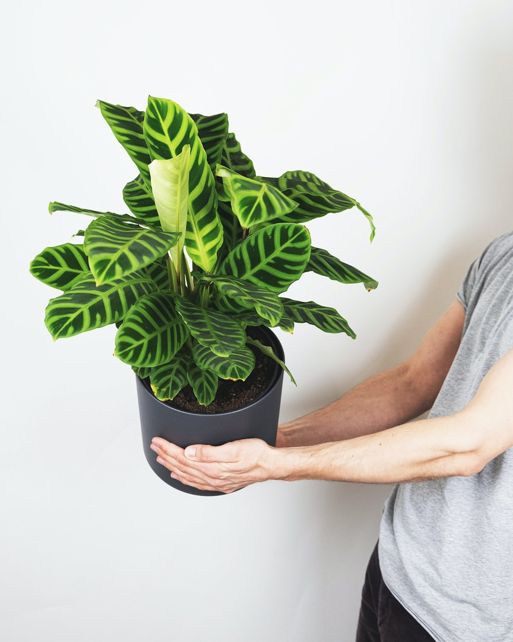 person holding green plant in black pot