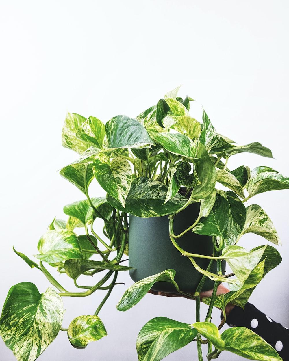 green plant on green pot