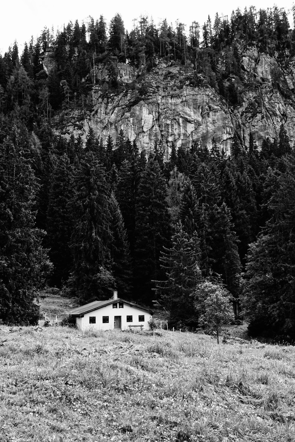 grayscale photo of house surrounded by trees