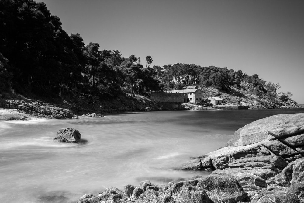 grayscale photo of body of water near trees