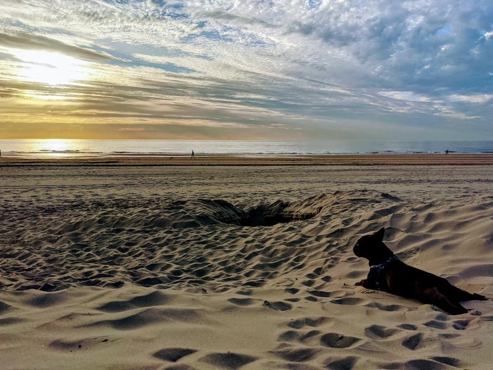 black short coat dog on brown sand during daytime