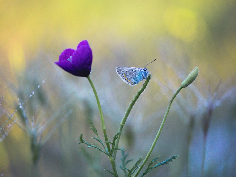 blue and white butterfly perched on purple flower in close up photography during daytime