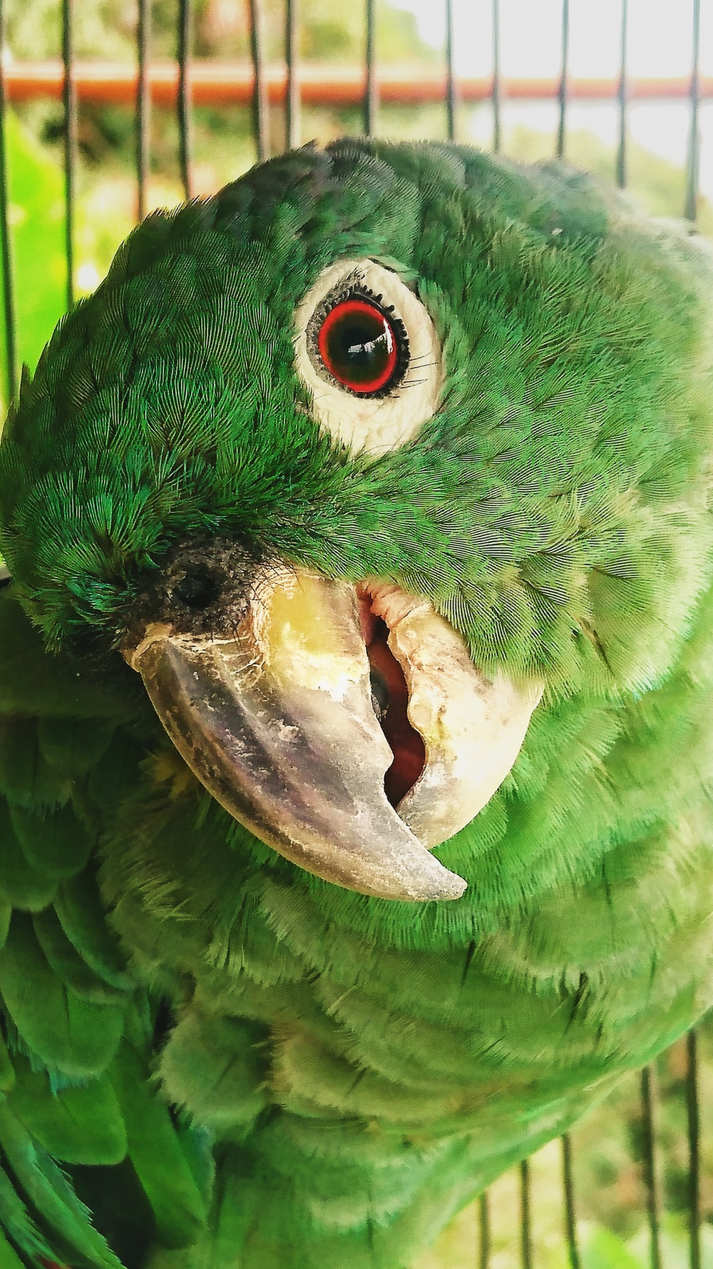 green and yellow bird in close up photography