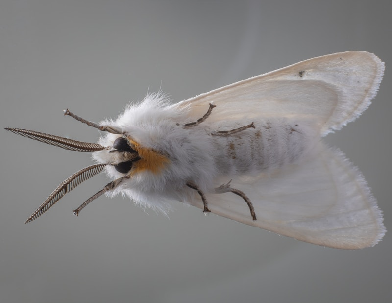 white and yellow moth on black surface